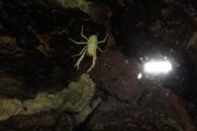jameos-del-agua-29