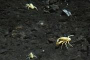 jameos-del-agua-9