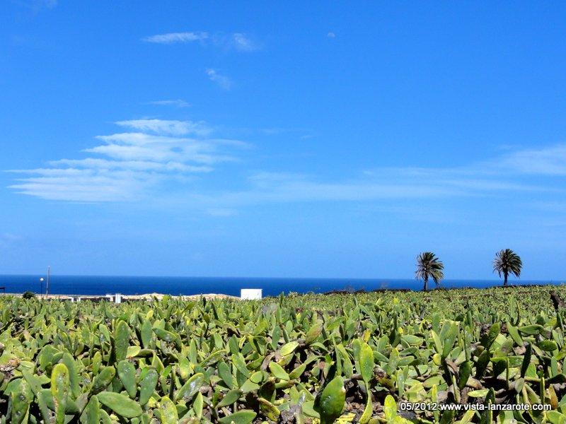 Kakteenfelder bei Guatiza