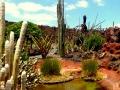 Kaktusgarten Guatiza