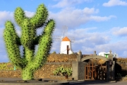 Jardin de Cactus - Kaktusgarten