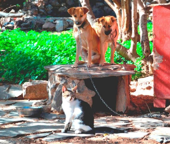 Tierarzt auf Lanzarote